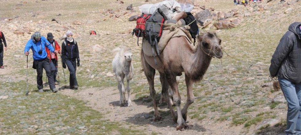 Lodgistics from Subash to Base camp of Muztagh Ata