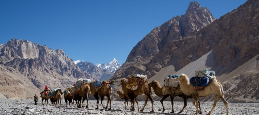 camel caravans in shaksgam valley